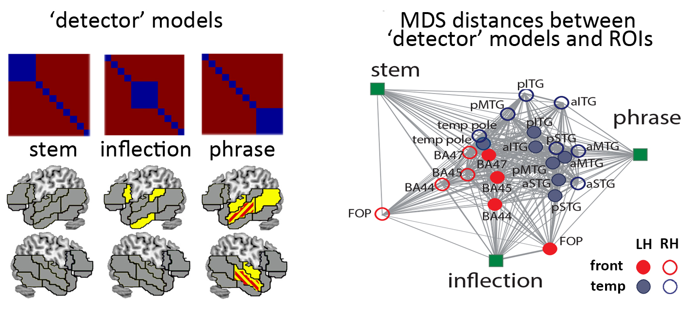 Multivariate RSA results showing dissociation between the functional properties of the left-lateralised and the bilateral processing networks; from Bozic et al (2015)