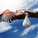 stork carrying a bag